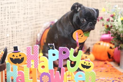10月3日ご来店のワンちゃんです!!_b0130018_21555208.jpg