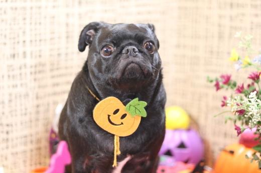10月3日ご来店のワンちゃんです!!_b0130018_21561150.jpg