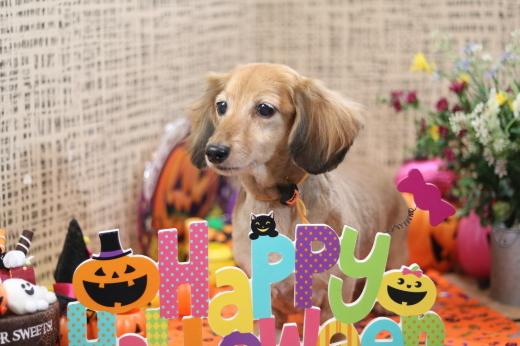 10月3日ご来店のワンちゃんです!!_b0130018_21571656.jpg