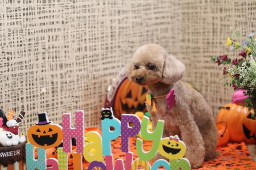 10月3日ご来店のワンちゃんです!!_b0130018_22035240.jpg