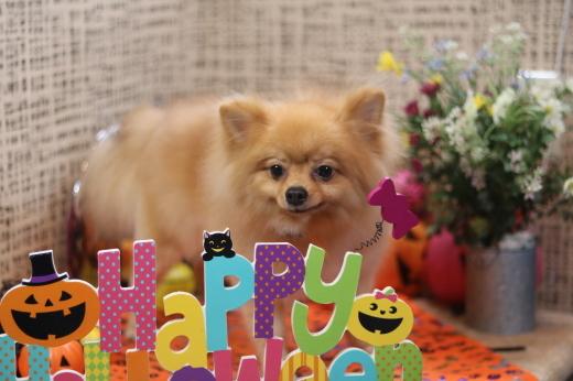 10月3日ご来店のワンちゃんです!!_b0130018_22085460.jpg