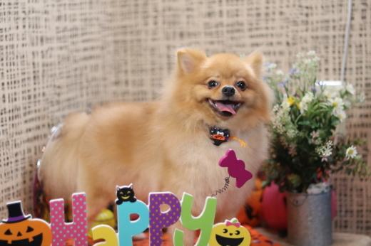 10月3日ご来店のワンちゃんです!!_b0130018_22091381.jpg