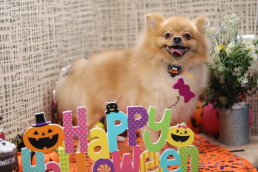 10月3日ご来店のワンちゃんです!!_b0130018_22100373.jpg