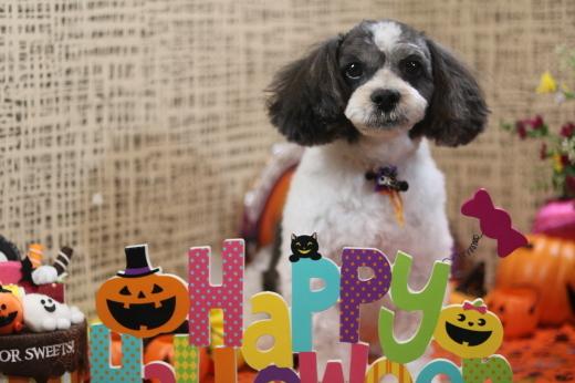 10月3日ご来店のワンちゃんです!!_b0130018_22113267.jpg