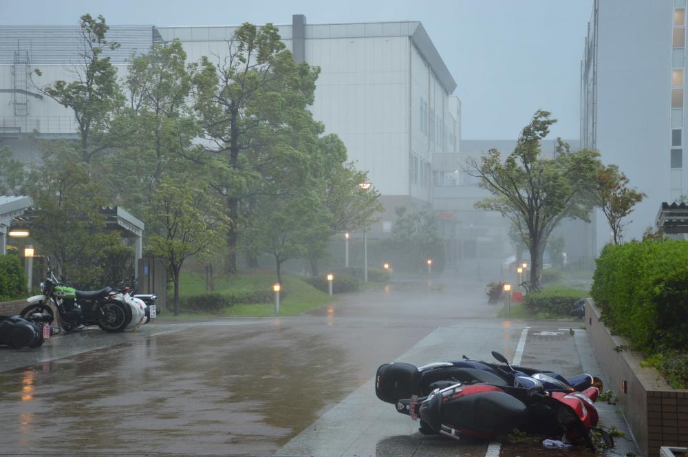 明日は台風だから?ですやん!_f0056935_15545686.jpg