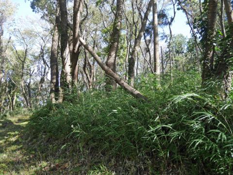六国見山森林公園でスギの中折れが多発9・30台風24号被害①_c0014967_08332007.jpg