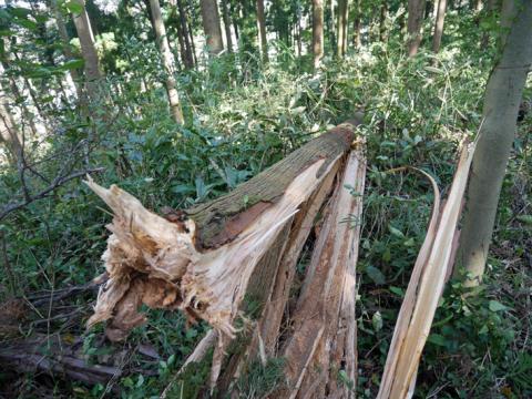 六国見山森林公園でスギの中折れが多発9・30台風24号被害①_c0014967_08391719.jpg