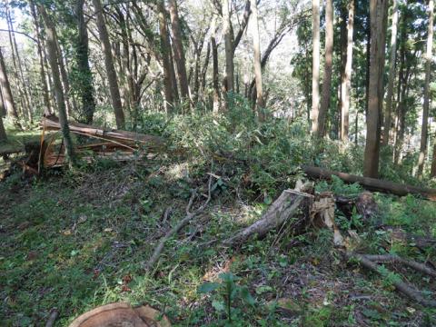 六国見山森林公園でスギの中折れが多発9・30台風24号被害①_c0014967_08393156.jpg