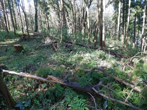 六国見山森林公園でスギの中折れが多発9・30台風24号被害①_c0014967_08433096.jpg