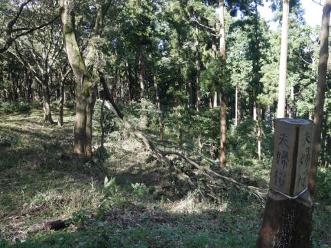 六国見山森林公園でスギの中折れが多発9・30台風24号被害①_c0014967_08434802.jpg