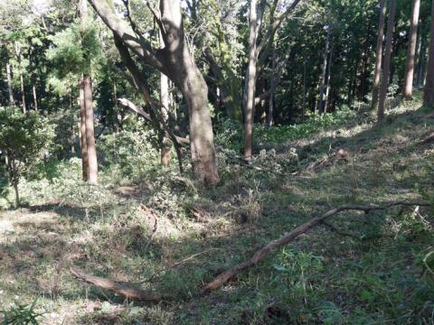 六国見山森林公園でスギの中折れが多発9・30台風24号被害①_c0014967_08443100.jpg