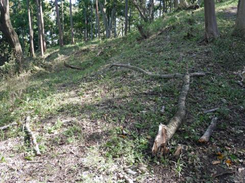 六国見山森林公園でスギの中折れが多発9・30台風24号被害①_c0014967_08445219.jpg