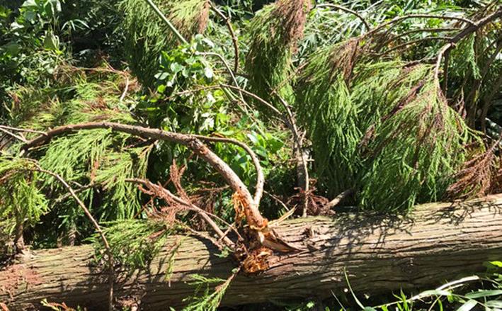 六国見山森林公園でスギの中折れが多発9・30台風24号被害①_c0014967_08511633.jpg