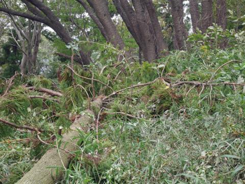 六国見山森林公園でスギの中折れが多発9・30台風24号被害①_c0014967_08515543.jpg