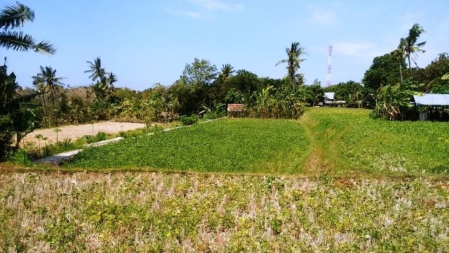 バリ島の田舎の生活(その1;好きな光景)_d0083068_12250552.jpg