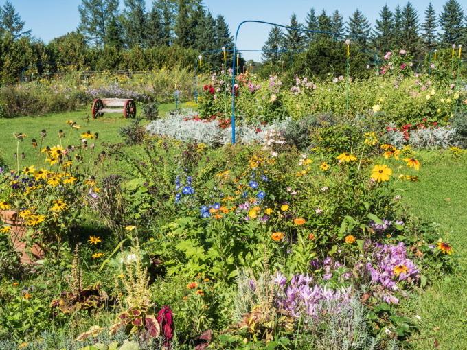 収穫の秋「じんぎすかん白樺」とハロウィンの「紫竹ガーデン」_f0276498_00184789.jpg