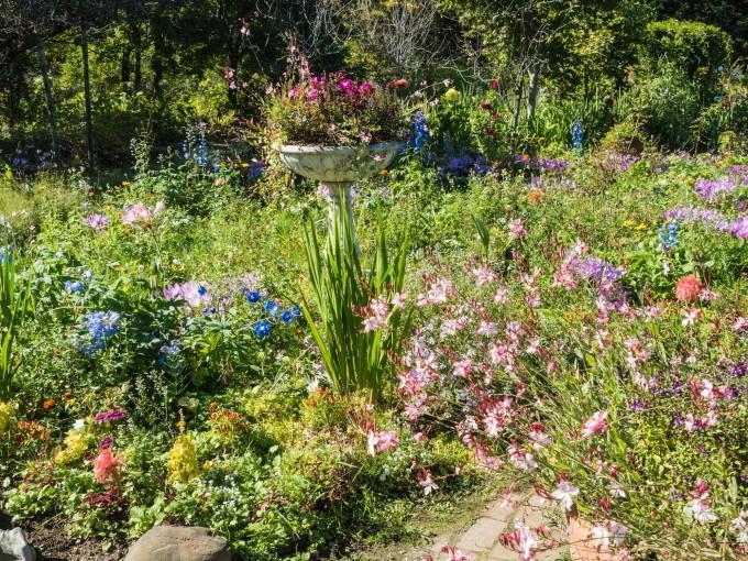 収穫の秋「じんぎすかん白樺」とハロウィンの「紫竹ガーデン」_f0276498_00193381.jpg