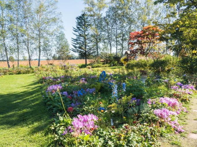 収穫の秋「じんぎすかん白樺」とハロウィンの「紫竹ガーデン」_f0276498_00205697.jpg