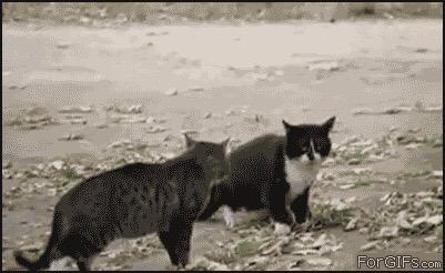 からくれない動物 124_c0072801_1474100.jpg