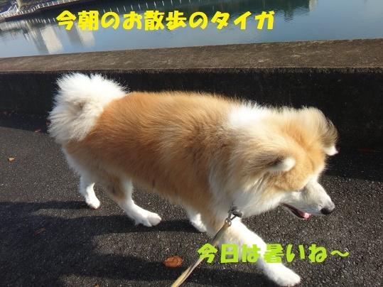 f0121712_23270015.jpg