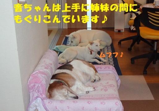 f0121712_23275961.jpg
