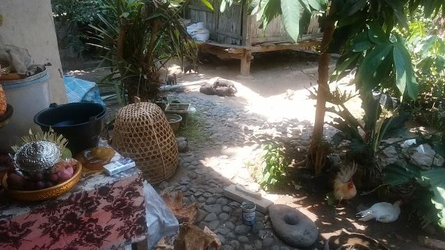 バリ島の田舎の生活(その2;豚と牛と鶏と果実)_d0083068_12533818.jpg