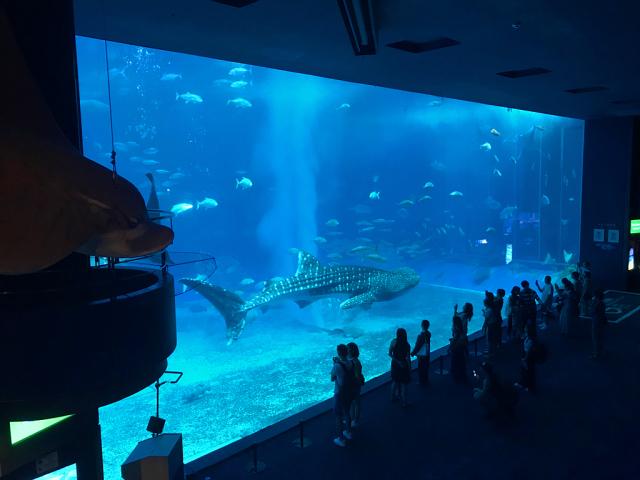 美ら海水族館_c0005077_22565858.jpg