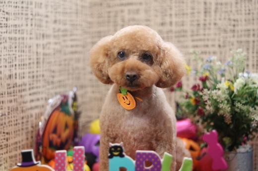 10月6日ご来店のお客様です!!_b0130018_06542711.jpg