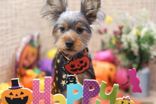 10月6日ご来店のお客様です!!_b0130018_06554092.jpg