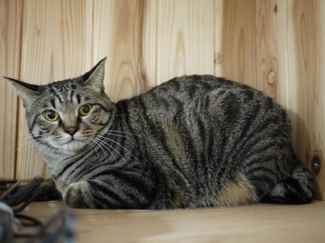猫のお留守番 星尾くん編。_a0143140_22274147.jpg