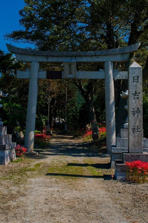 日吉神社(湖北町)~彼岸花_e0363038_23532164.jpg