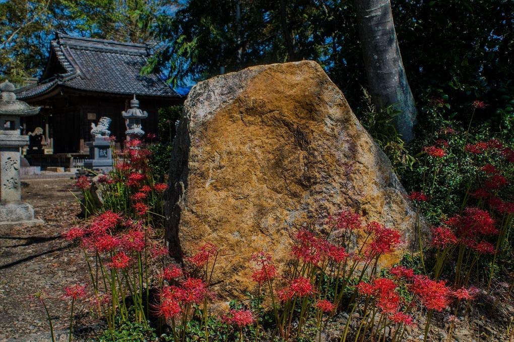 日吉神社(湖北町)~彼岸花_e0363038_23534613.jpg