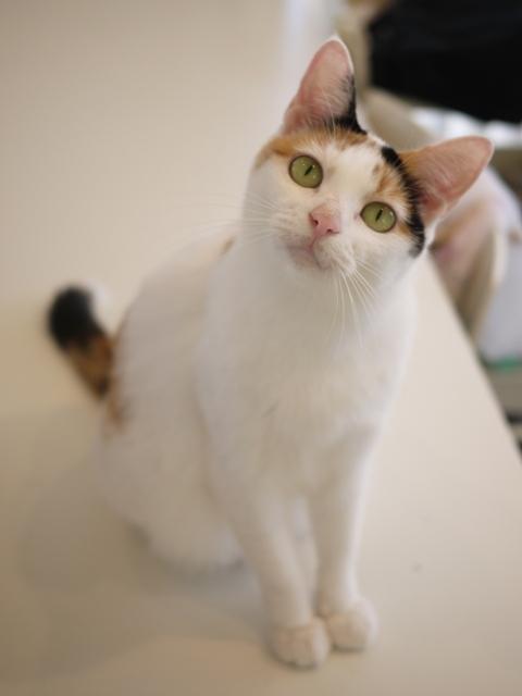 猫のお留守番 エンジェルちゃん編。_a0143140_21211346.jpg