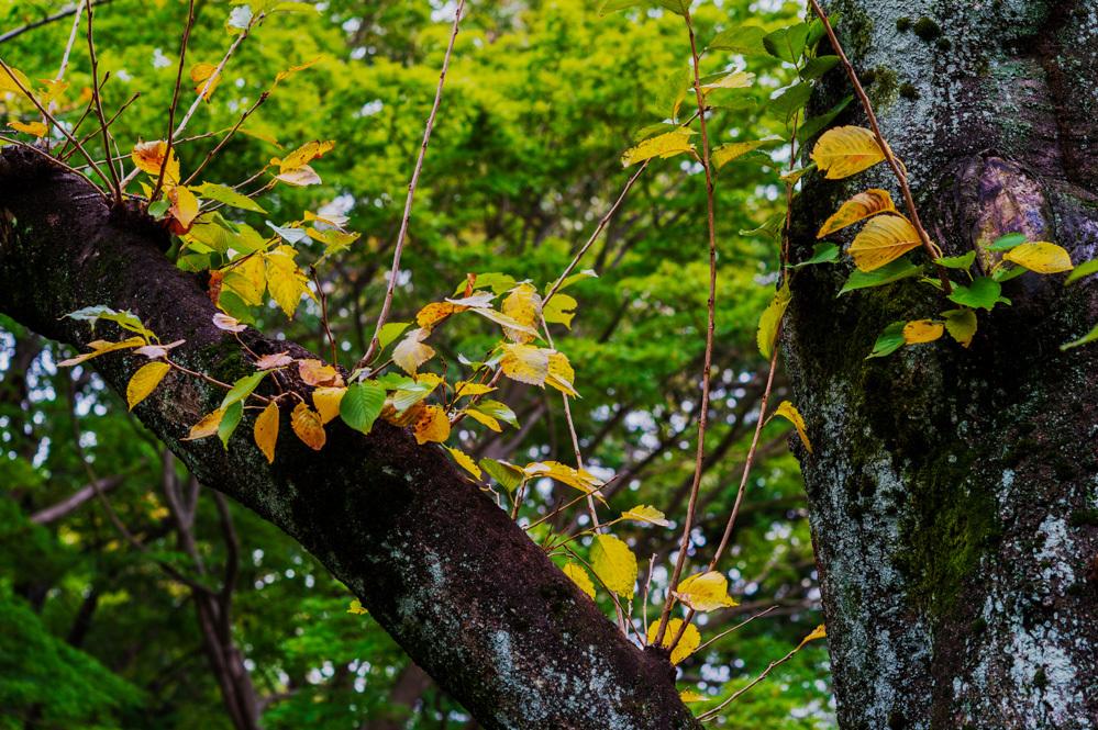 いつの間にか、秋色に染まり始めた。_a0261169_18181229.jpg