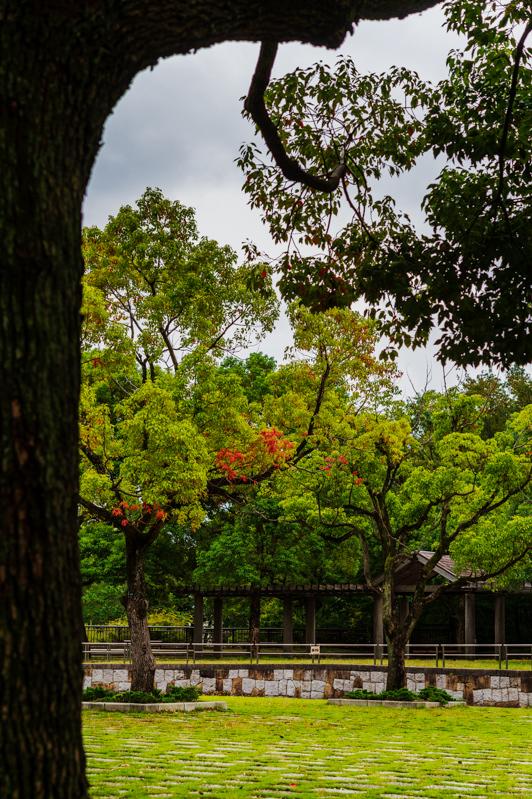 いつの間にか、秋色に染まり始めた。_a0261169_18183579.jpg