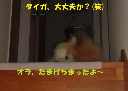 f0121712_02445816.jpg