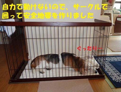 f0121712_14344469.jpg