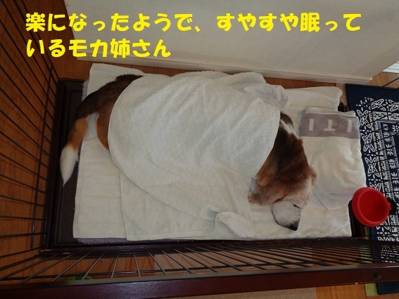 f0121712_15032773.jpg