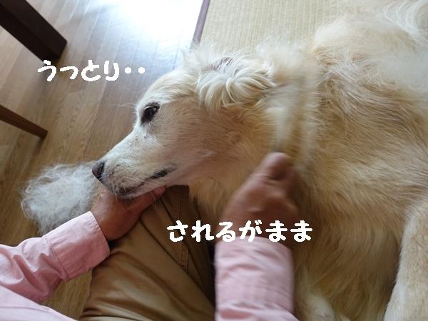 b0119525_13471204.jpg