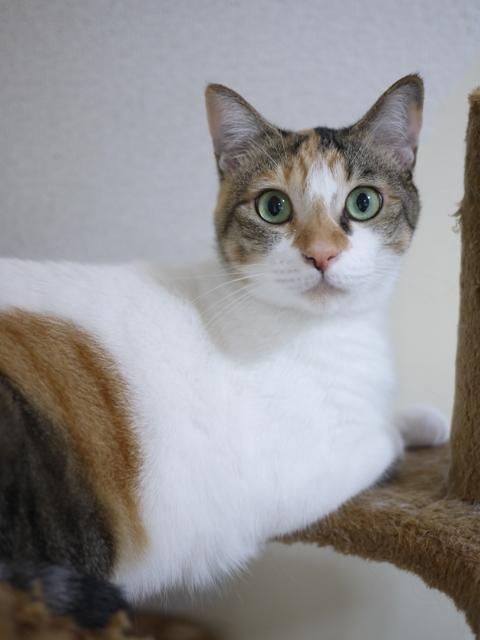 猫のお留守番 みーちゃん編。_a0143140_22305132.jpg