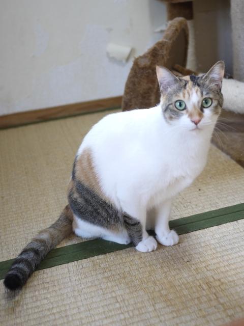 猫のお留守番 みーちゃん編。_a0143140_22323909.jpg