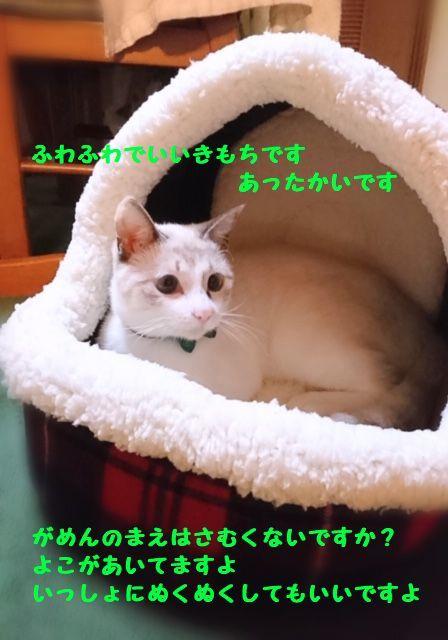 d0393041_14091213.jpg