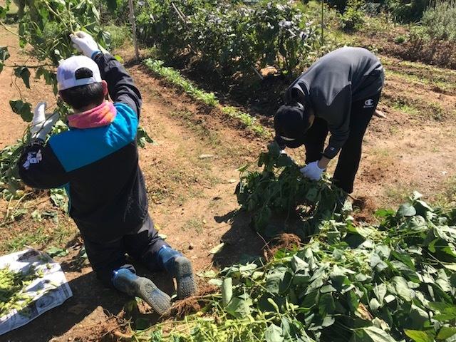 枝豆の収穫&みかんの収穫してきました。。。。(\';\')_f0065444_14520518.jpeg
