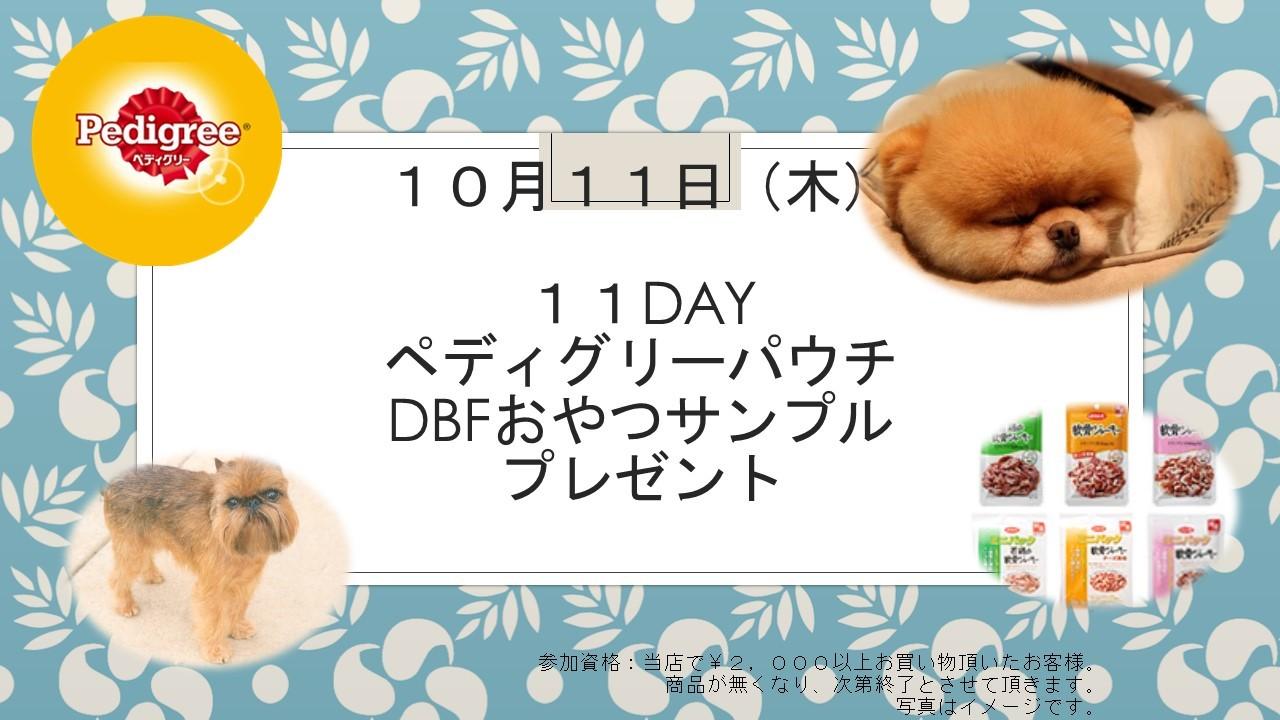 181009 11DAYイベント告知_e0181866_11054229.jpg