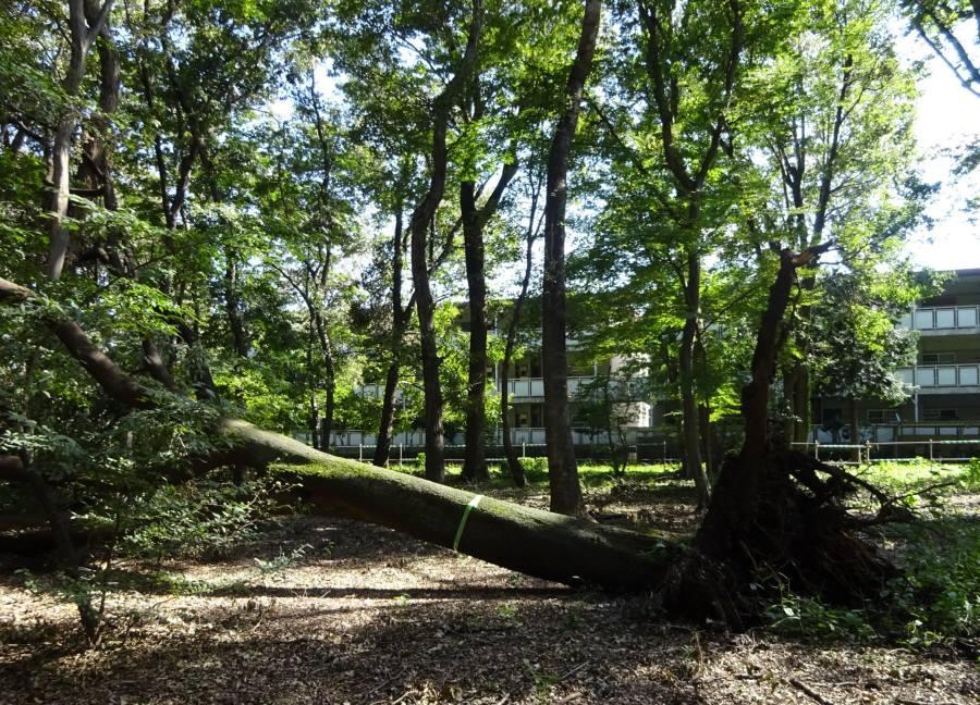 台風24号による倒木被害_f0059673_18474405.jpg