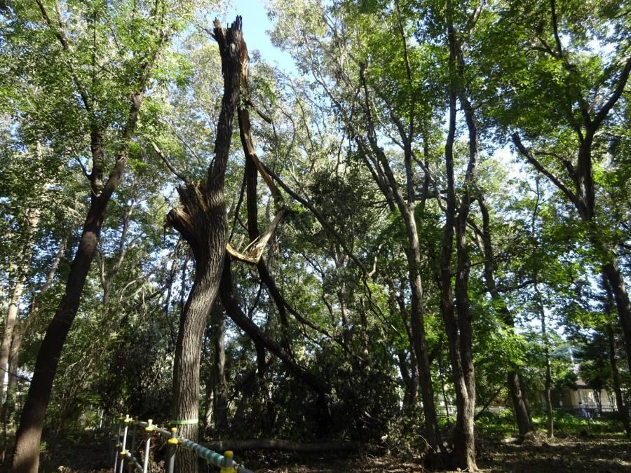 台風24号による倒木被害_f0059673_18475427.jpg