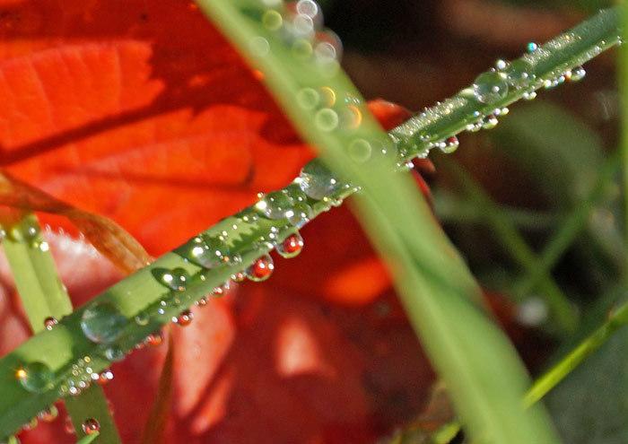 水滴_d0162994_10251898.jpg