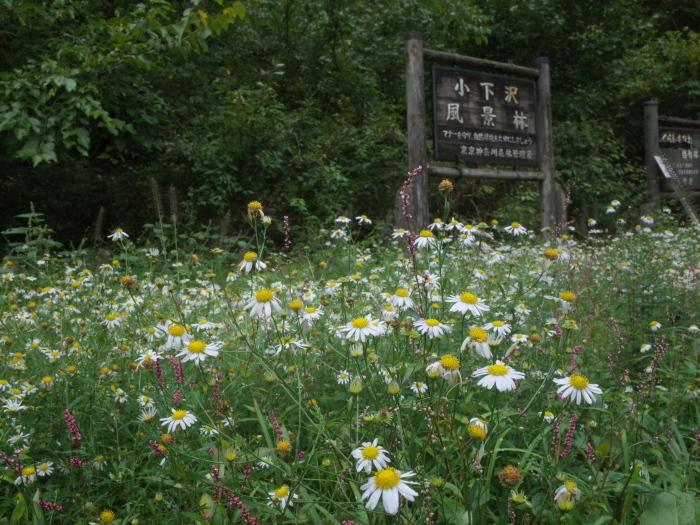 小下沢〜景信山 1_e0276411_22214197.jpg