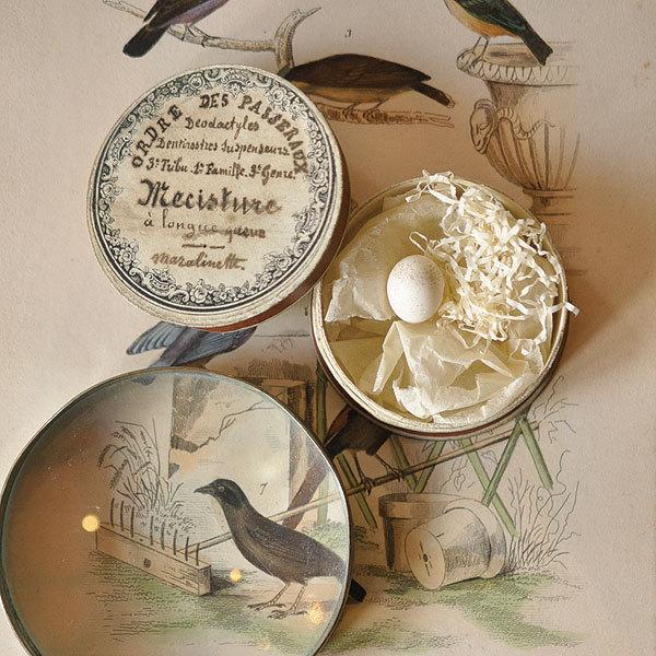 野鳥の卵の標本_f0247848_18291560.jpg