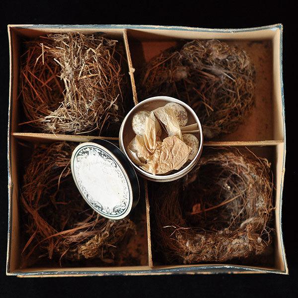 野鳥の卵の標本_f0247848_18295741.jpg